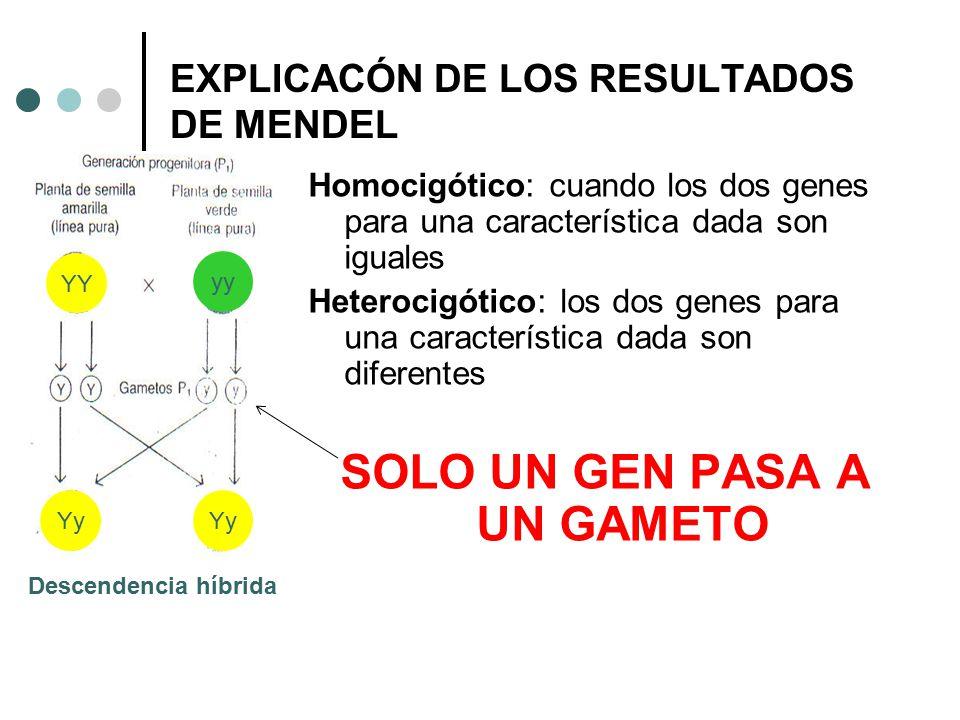 EXPLICACÓN DE LOS RESULTADOS DE MENDEL