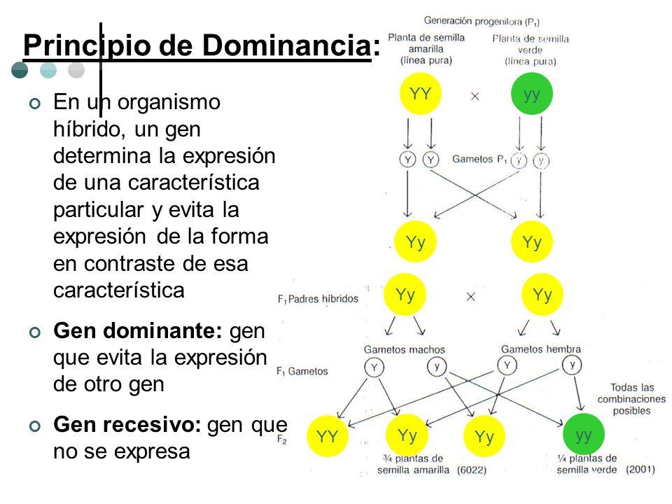 Principio de Dominancia: