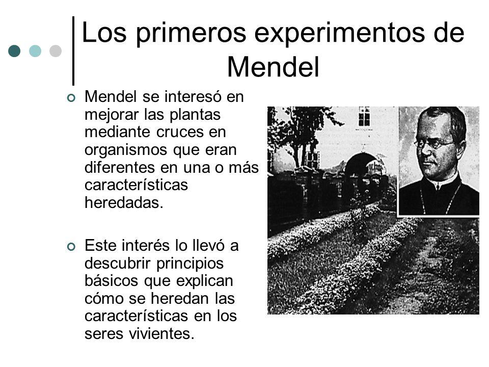 Los primeros experimentos de Mendel