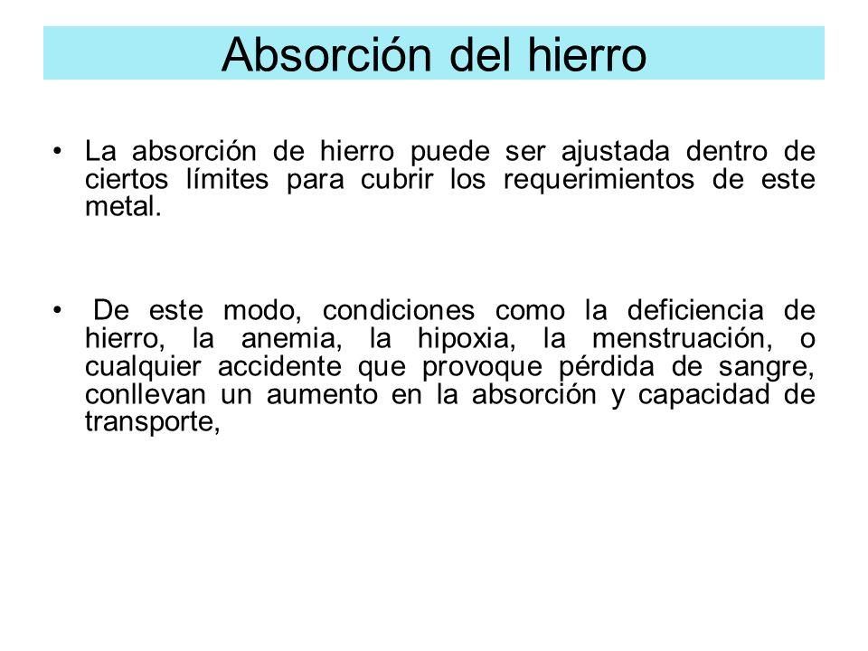 Absorción del hierro La absorción de hierro puede ser ajustada dentro de ciertos límites para cubrir los requerimientos de este metal.
