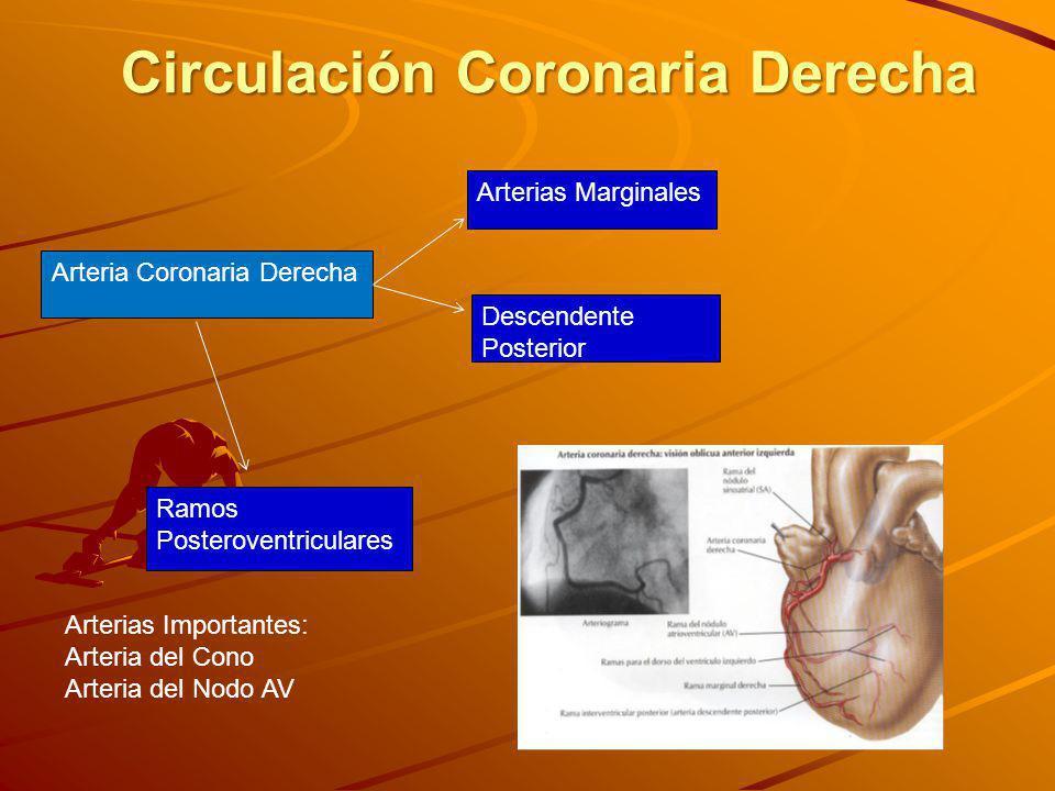 Circulación Coronaria Derecha