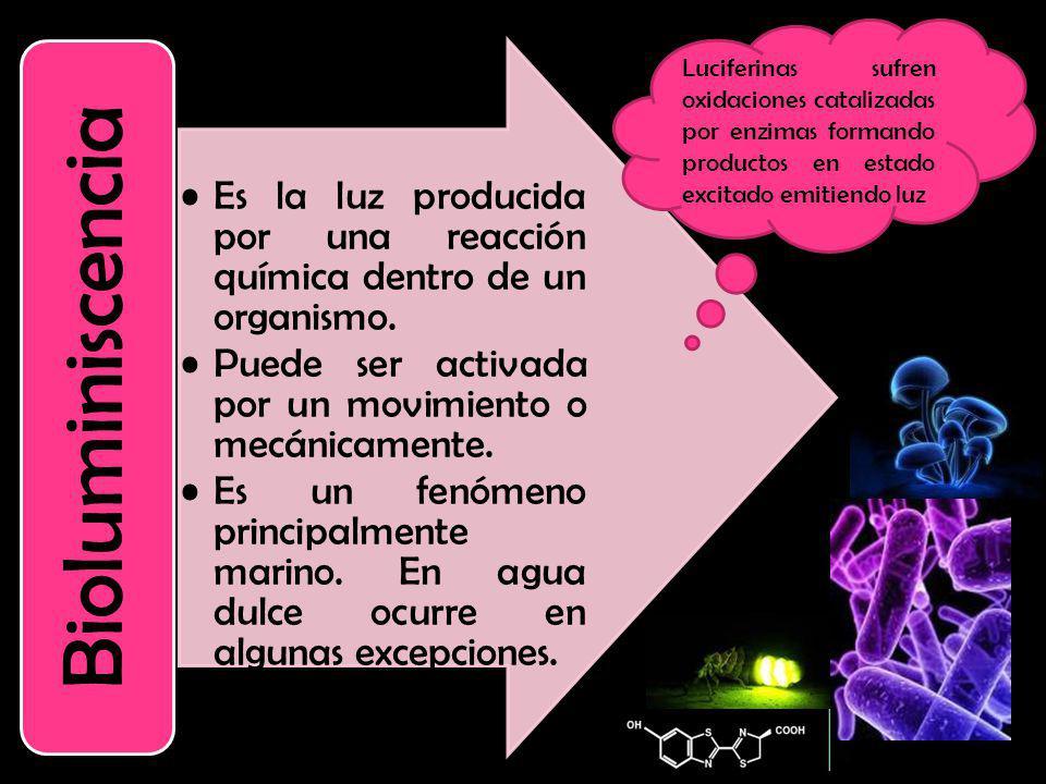 Es la luz producida por una reacción química dentro de un organismo.
