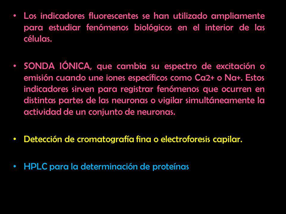 Los indicadores fluorescentes se han utilizado ampliamente para estudiar fenómenos biológicos en el interior de las células.