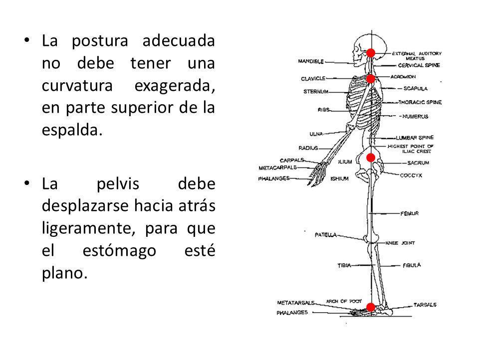 La postura adecuada no debe tener una curvatura exagerada, en parte superior de la espalda.