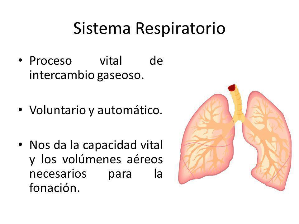Sistema Respiratorio Proceso vital de intercambio gaseoso.