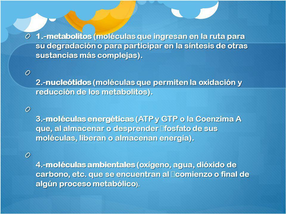 1.-metabolitos (moléculas que ingresan en la ruta para su degradación o para participar en la síntesis de otras sustancias más complejas).