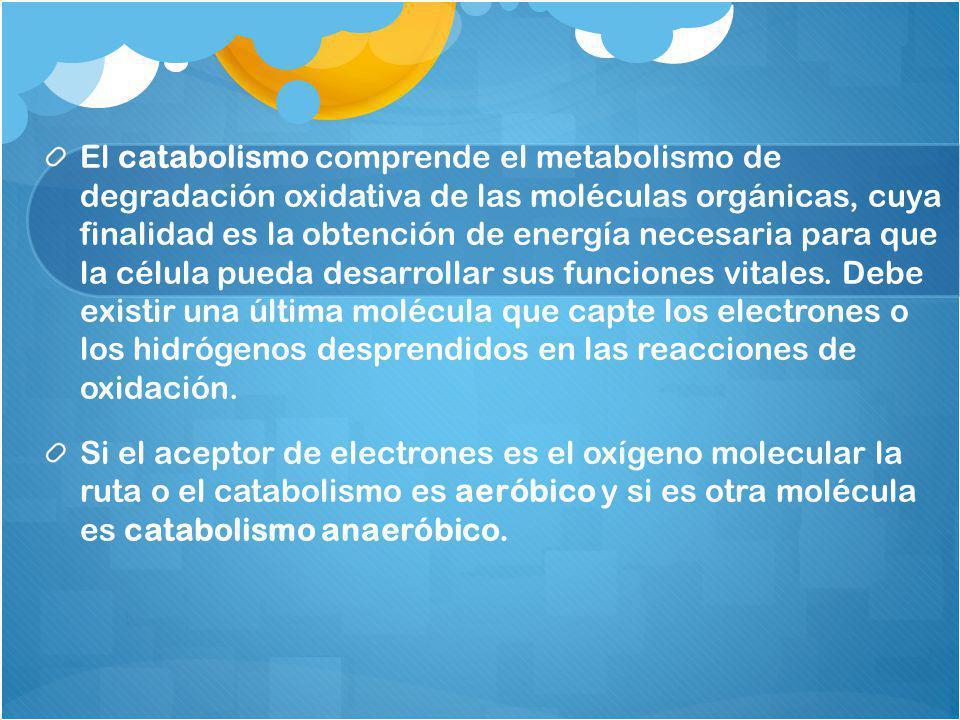 El catabolismo comprende el metabolismo de degradación oxidativa de las moléculas orgánicas, cuya finalidad es la obtención de energía necesaria para que la célula pueda desarrollar sus funciones vitales. Debe existir una última molécula que capte los electrones o los hidrógenos desprendidos en las reacciones de oxidación.
