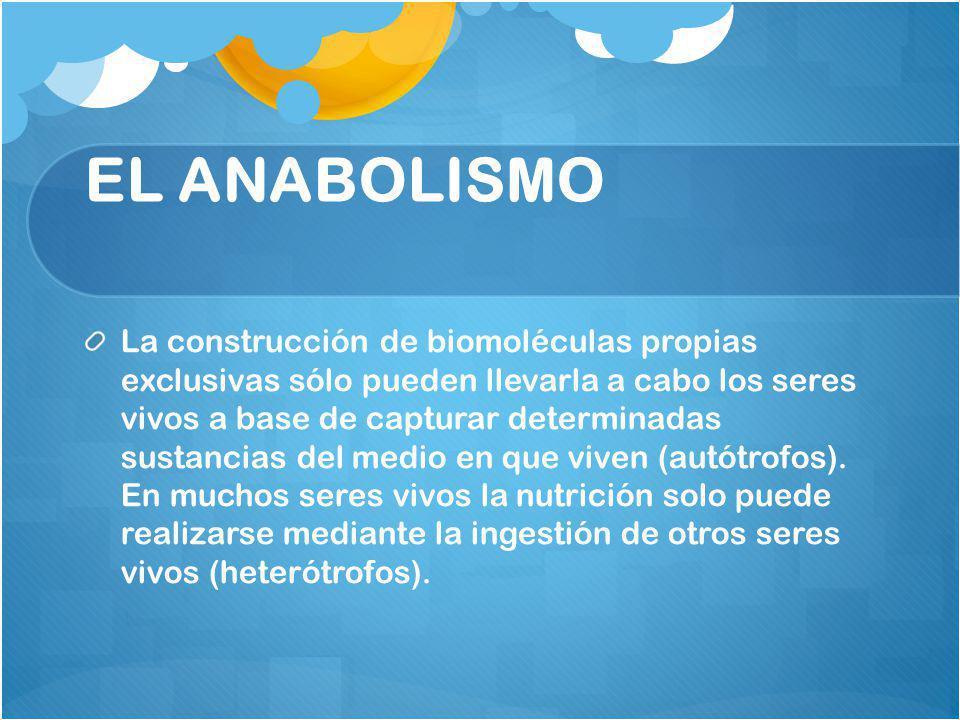 EL ANABOLISMO