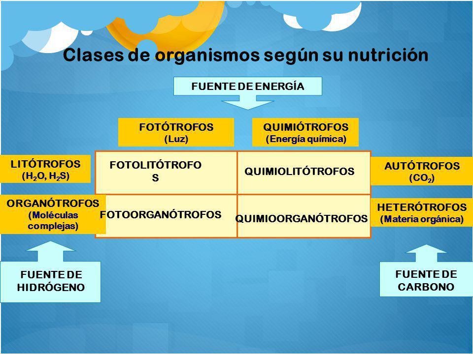 Clases de organismos según su nutrición