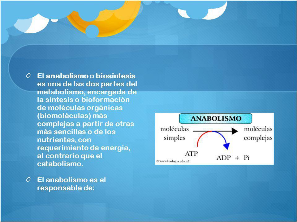 El anabolismo o biosíntesis es una de las dos partes del metabolismo, encargada de la síntesis o bioformación de moléculas orgánicas (biomoléculas) más complejas a partir de otras más sencillas o de los nutrientes, con requerimiento de energía, al contrario que el catabolismo.