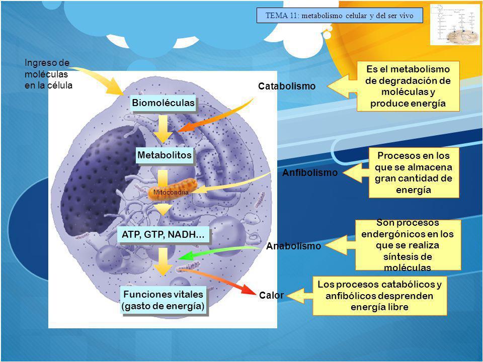 Ingreso de moléculas en la célula