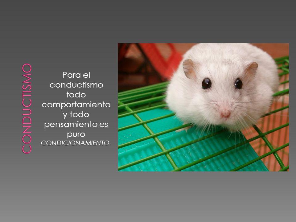 conductismo Para el conductismo todo comportamiento y todo pensamiento es puro CONDICIONAMIENTO.