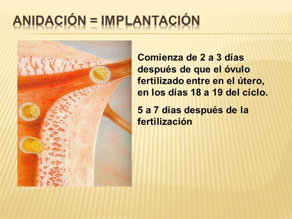 Anidación = Implantación