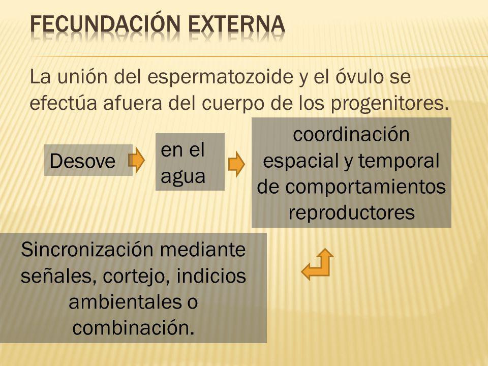 coordinación espacial y temporal de comportamientos reproductores