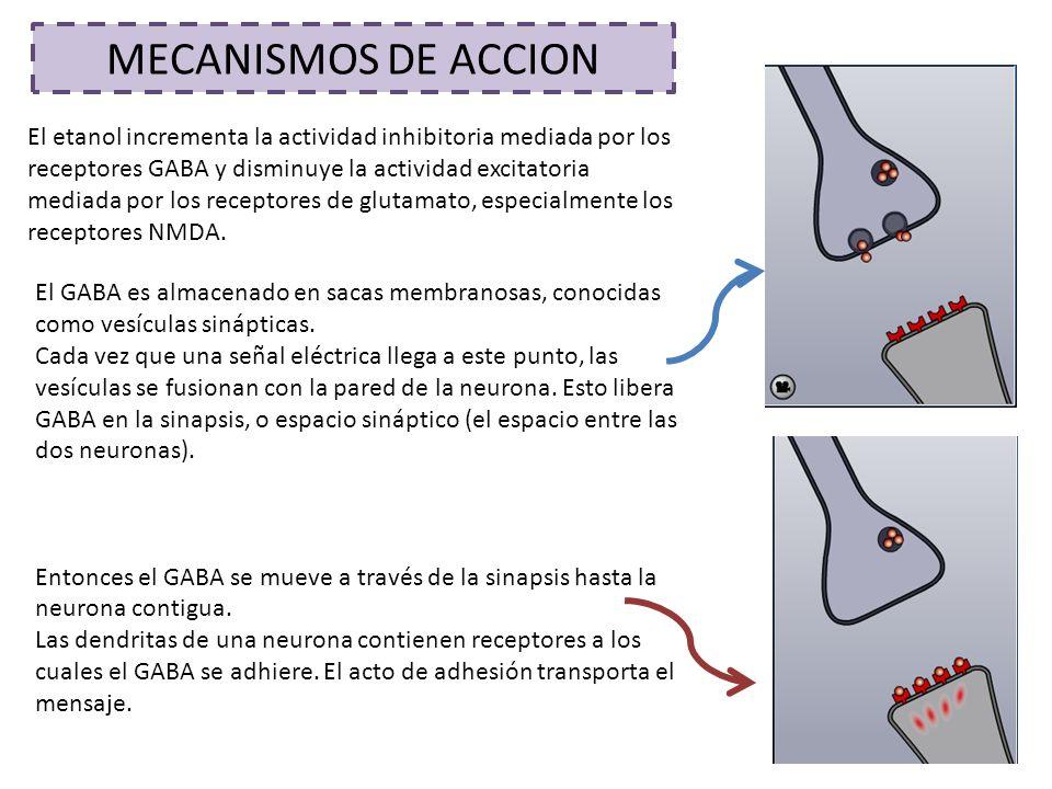 MECANISMOS DE ACCION