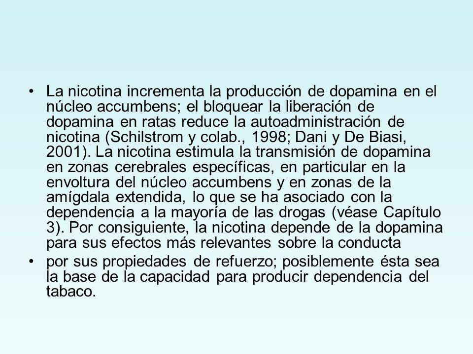 La nicotina incrementa la producción de dopamina en el núcleo accumbens; el bloquear la liberación de dopamina en ratas reduce la autoadministración de nicotina (Schilstrom y colab., 1998; Dani y De Biasi, 2001). La nicotina estimula la transmisión de dopamina en zonas cerebrales específicas, en particular en la envoltura del núcleo accumbens y en zonas de la amígdala extendida, lo que se ha asociado con la dependencia a la mayoría de las drogas (véase Capítulo 3). Por consiguiente, la nicotina depende de la dopamina para sus efectos más relevantes sobre la conducta