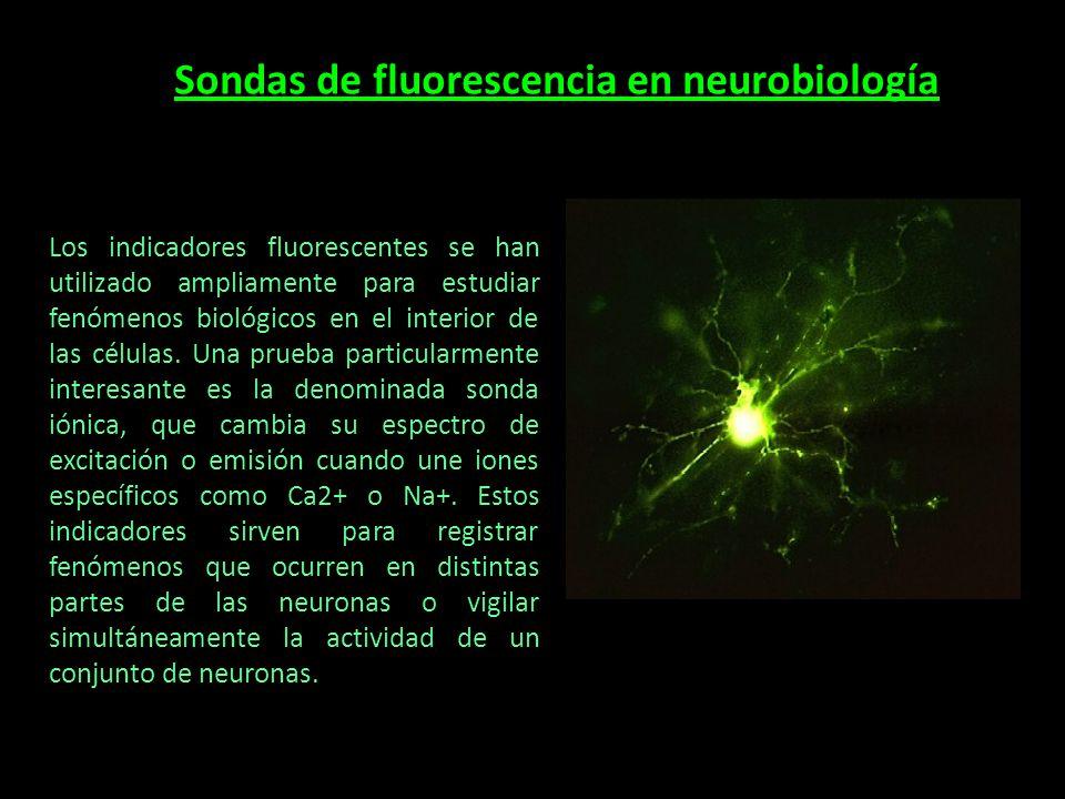 Sondas de fluorescencia en neurobiología