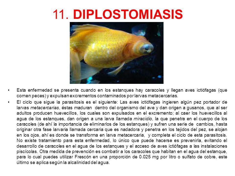 11. DIPLOSTOMIASIS