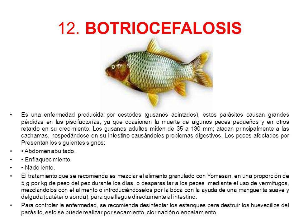 12. BOTRIOCEFALOSIS