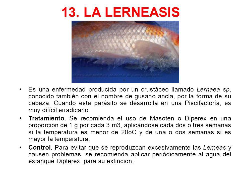 13. LA LERNEASIS