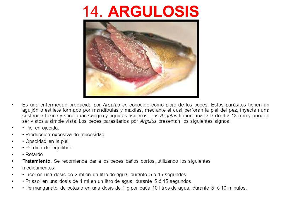 14. ARGULOSIS
