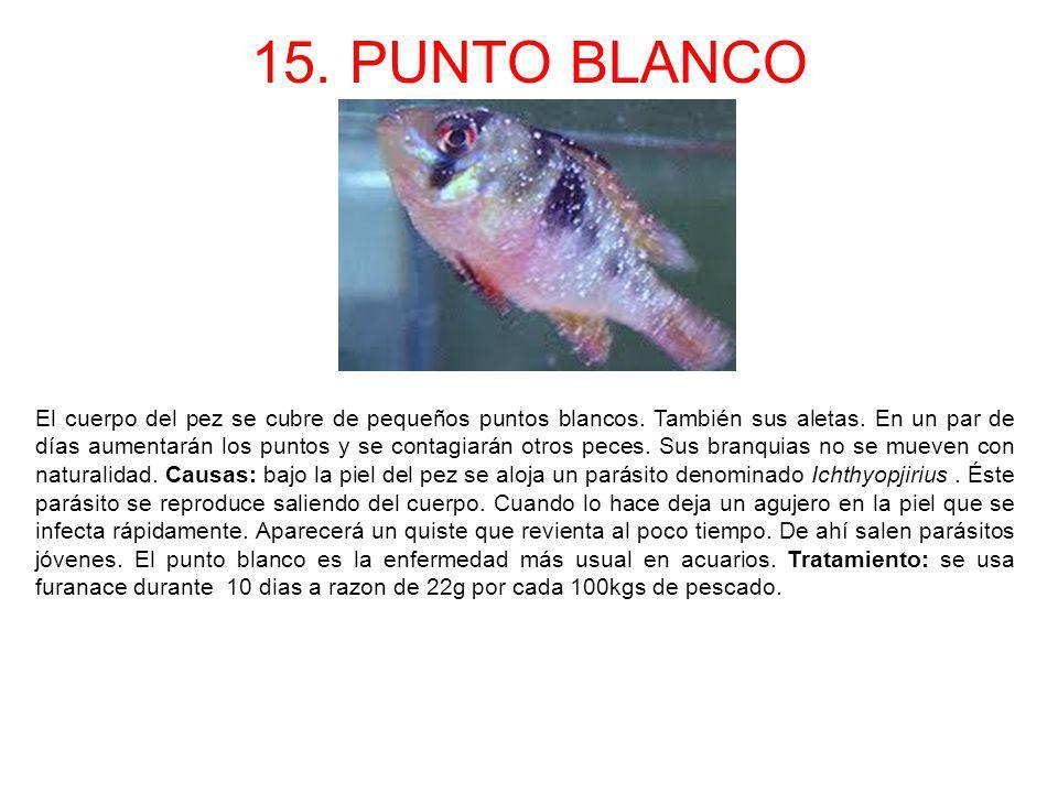15. PUNTO BLANCO