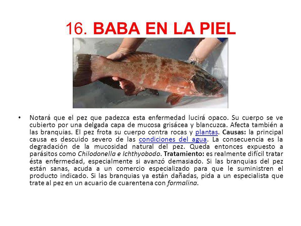 16. BABA EN LA PIEL