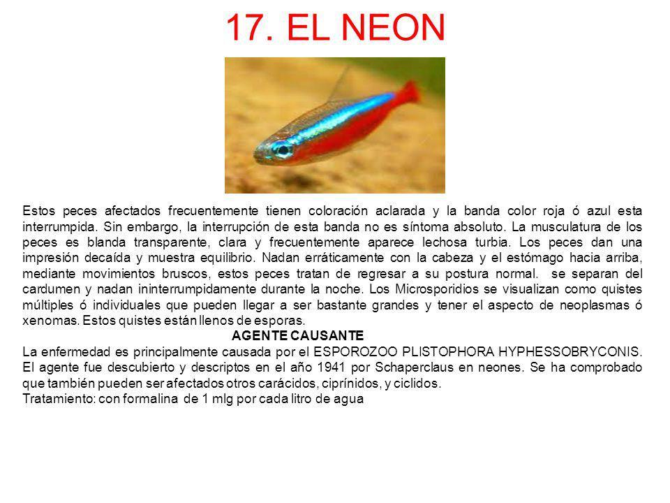 17. EL NEON