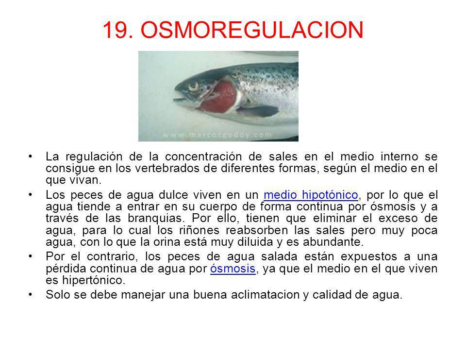 19. OSMOREGULACION