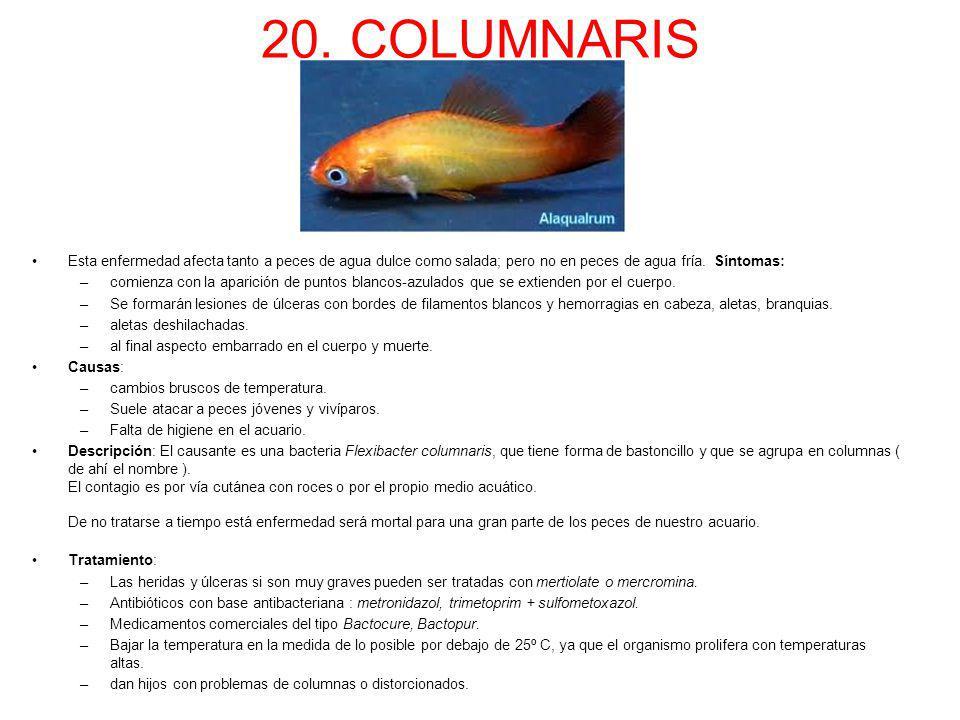 20. COLUMNARIS Esta enfermedad afecta tanto a peces de agua dulce como salada; pero no en peces de agua fría. Síntomas: