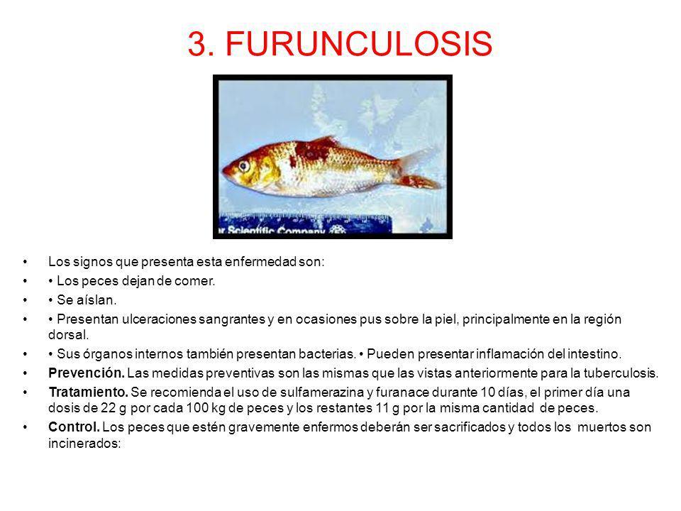 3. FURUNCULOSIS Los signos que presenta esta enfermedad son: