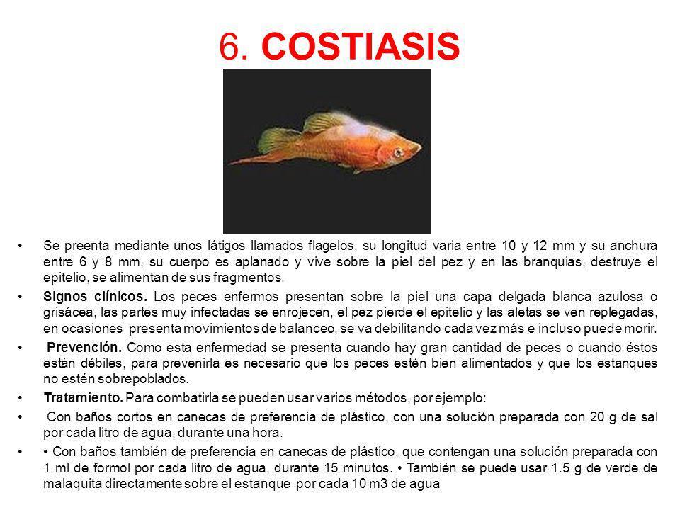 6. COSTIASIS