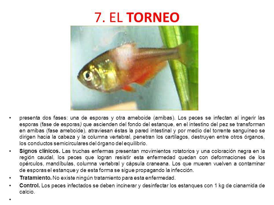7. EL TORNEO