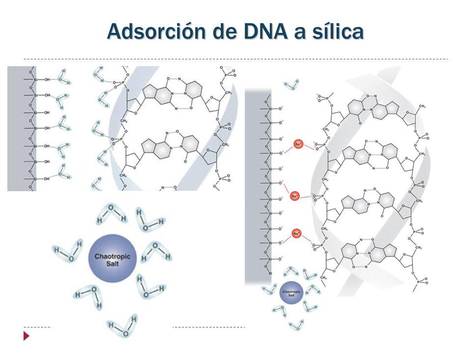 Adsorción de DNA a sílica