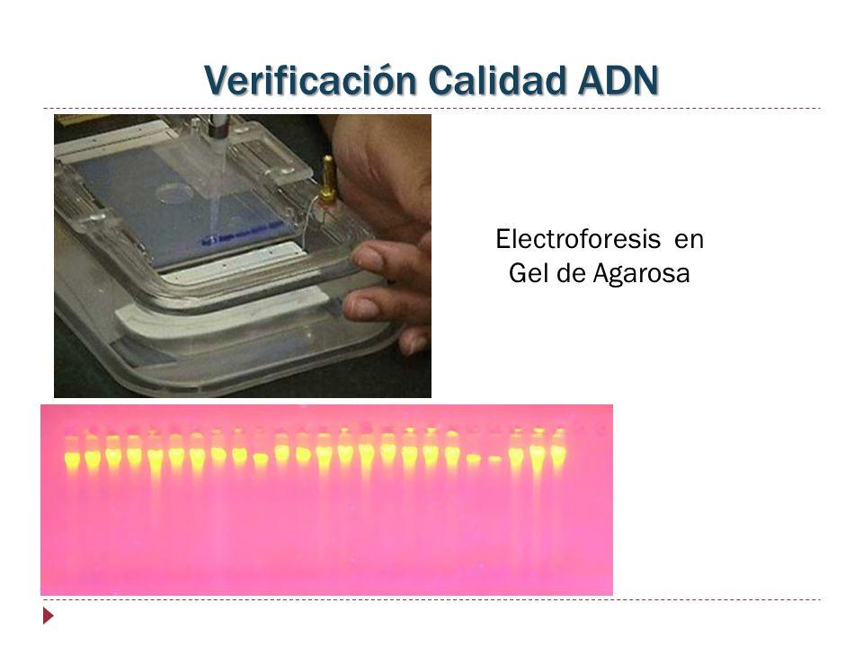 Verificación Calidad ADN