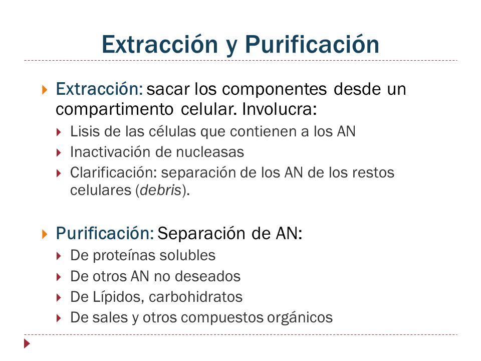 Extracción y Purificación
