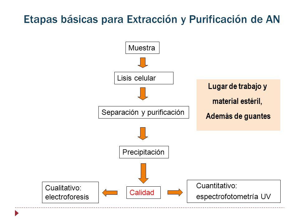 Etapas básicas para Extracción y Purificación de AN