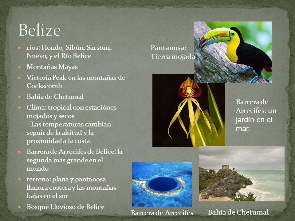Belize Pantanosa: Tierra mojada