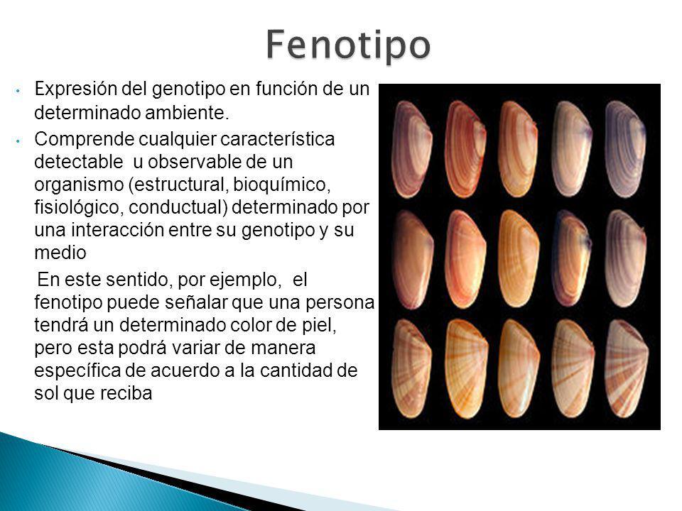 Fenotipo Expresión del genotipo en función de un determinado ambiente.