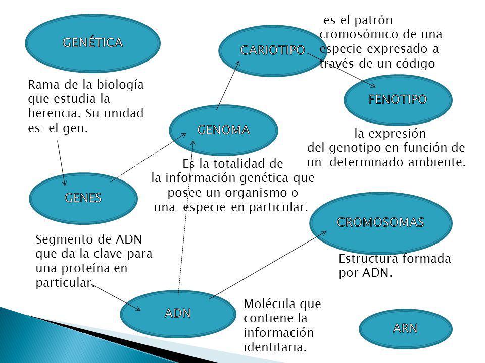 la expresión del genotipo en función de un determinado ambiente.