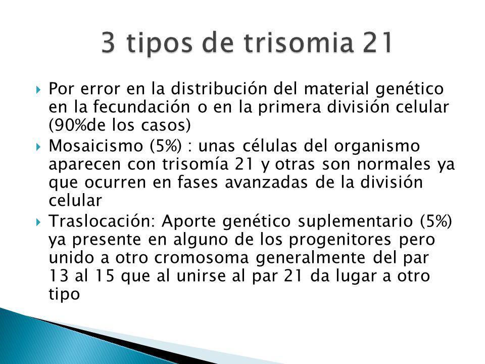 3 tipos de trisomia 21 Por error en la distribución del material genético en la fecundación o en la primera división celular (90%de los casos)