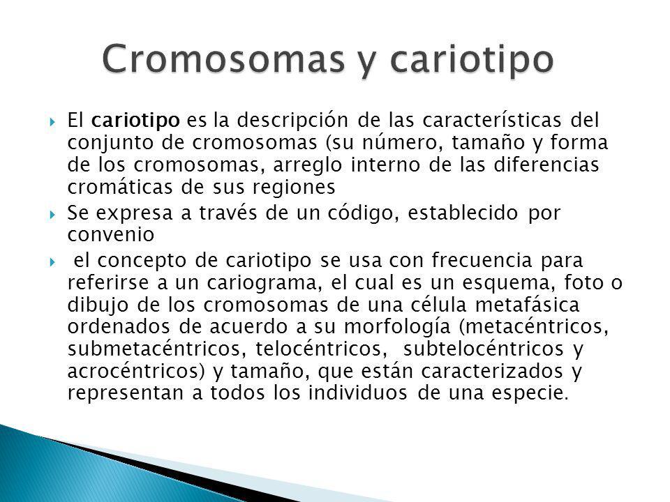 Cromosomas y cariotipo
