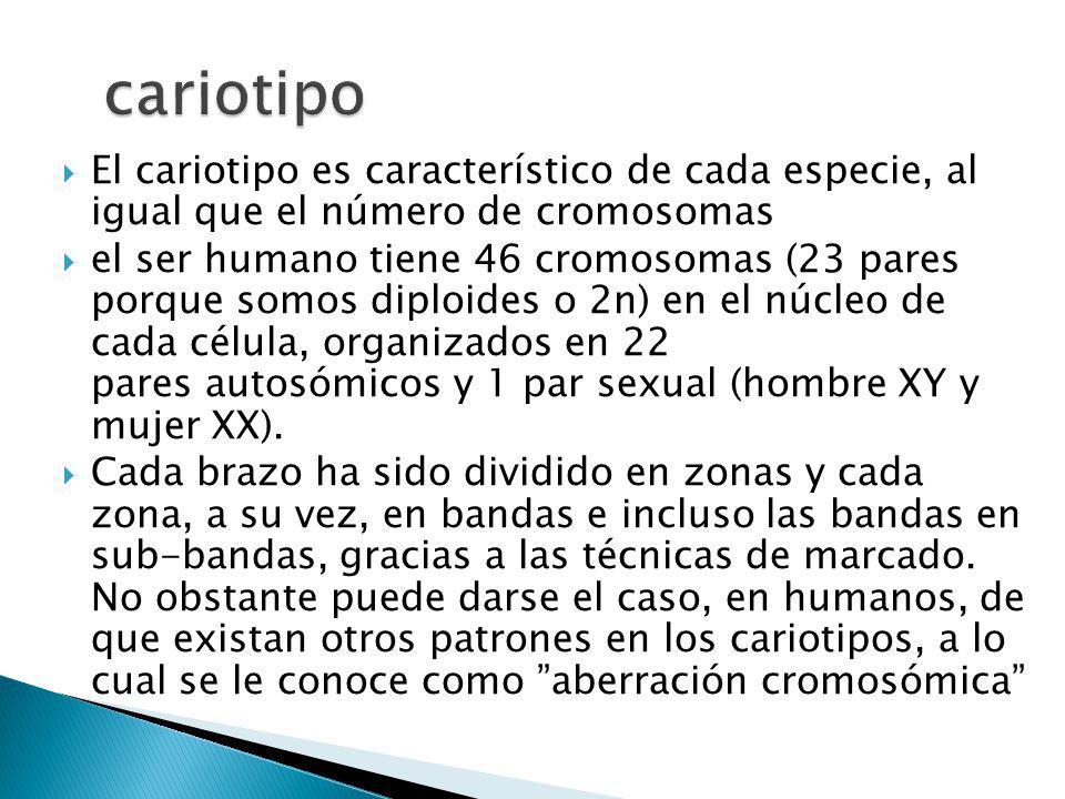 cariotipo El cariotipo es característico de cada especie, al igual que el número de cromosomas.