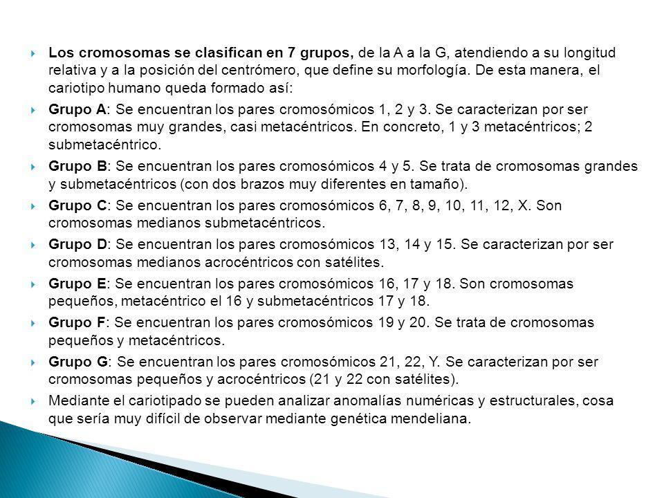 Los cromosomas se clasifican en 7 grupos, de la A a la G, atendiendo a su longitud relativa y a la posición del centrómero, que define su morfología. De esta manera, el cariotipo humano queda formado así: