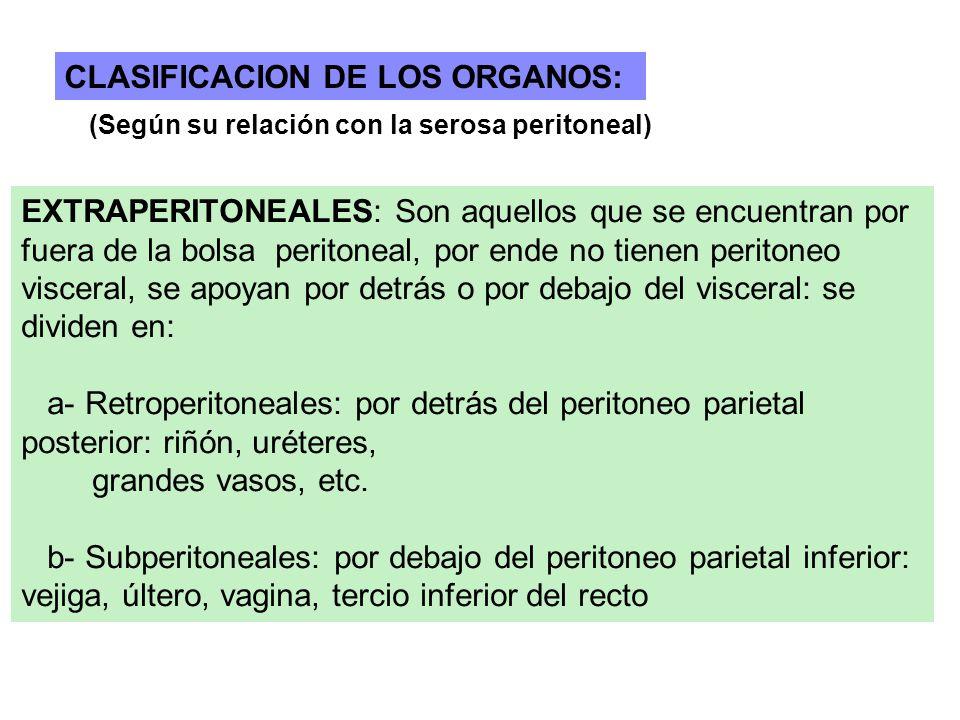 CLASIFICACION DE LOS ORGANOS: