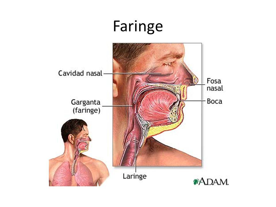 Faringe