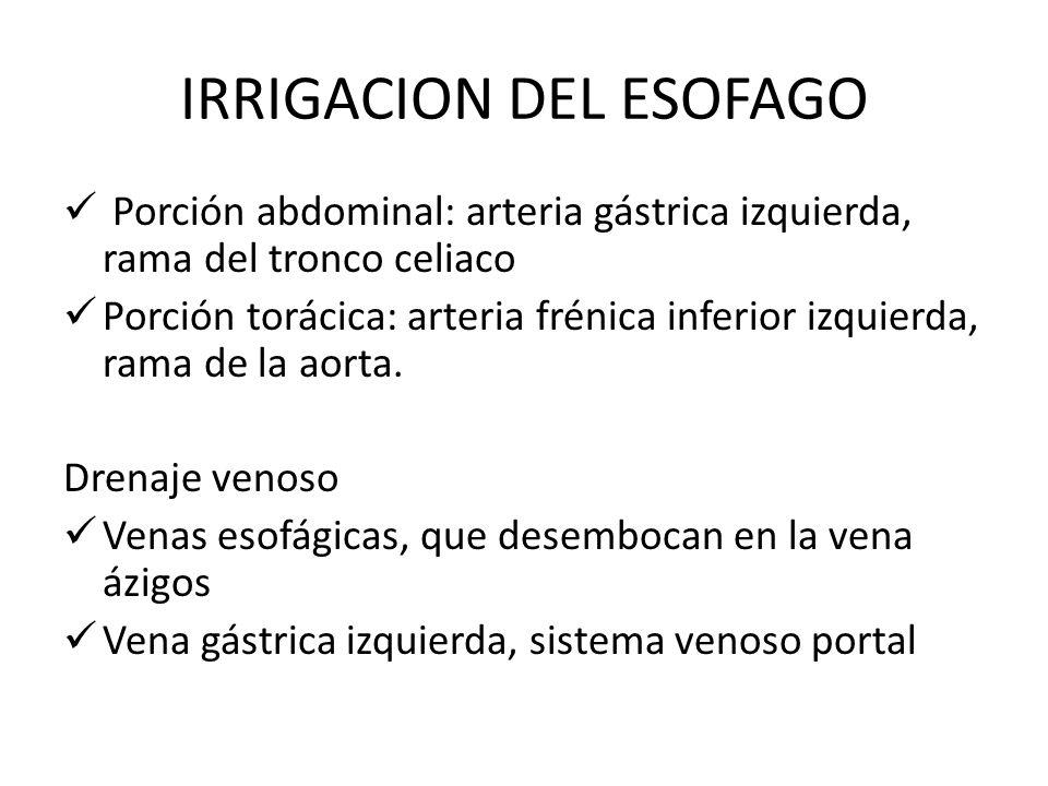 IRRIGACION DEL ESOFAGO