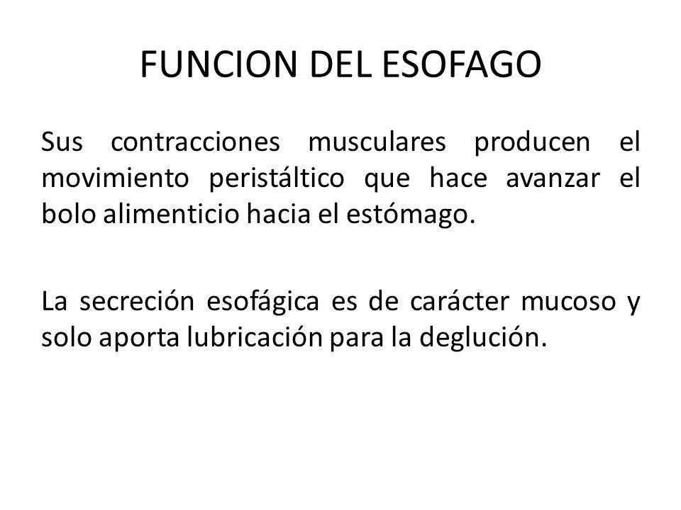 FUNCION DEL ESOFAGO