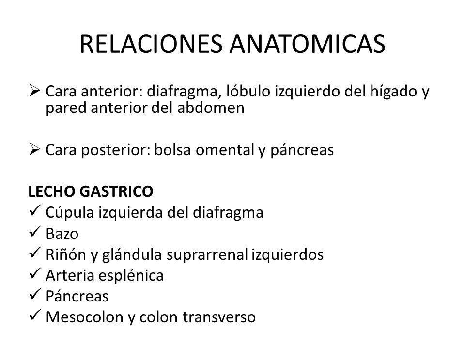 RELACIONES ANATOMICAS