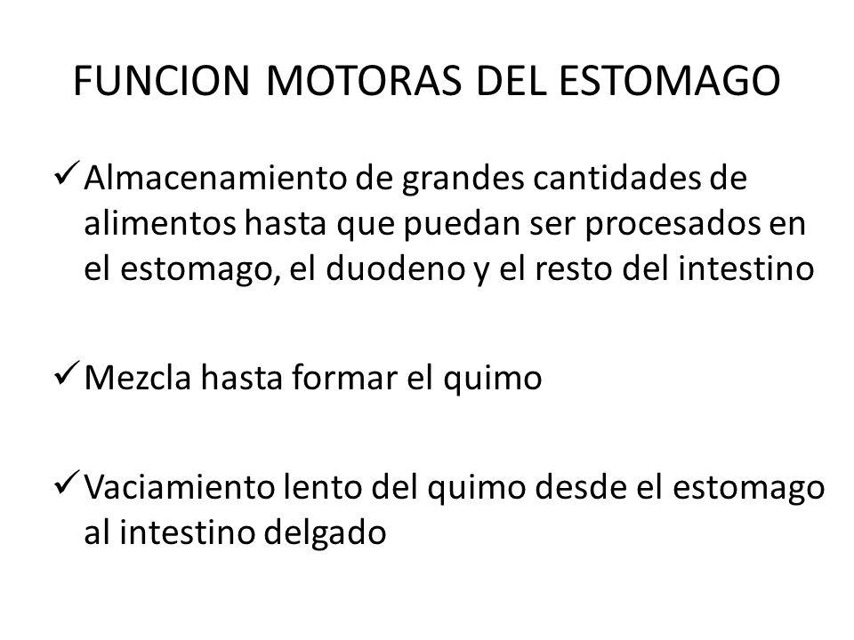 FUNCION MOTORAS DEL ESTOMAGO
